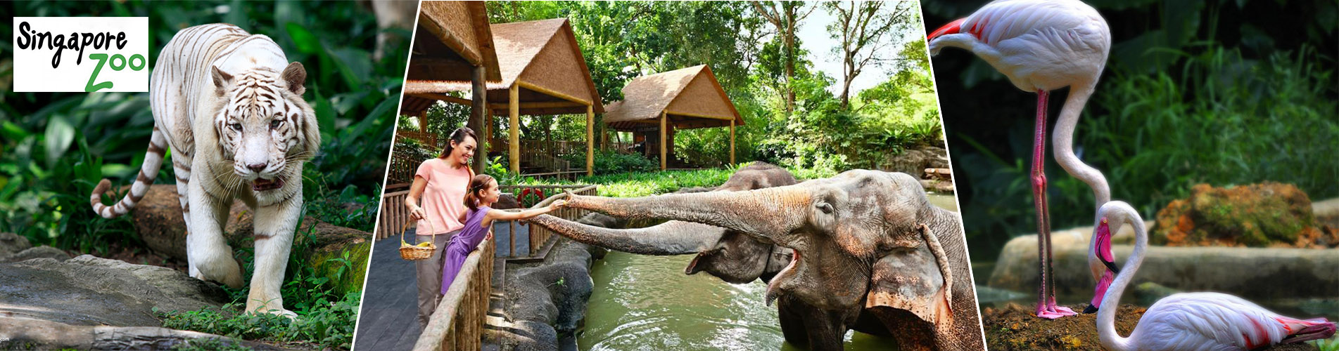 新加坡動物園門票